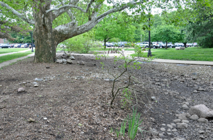 Current condition of Red Oak Rain Garden (Spring 2017)