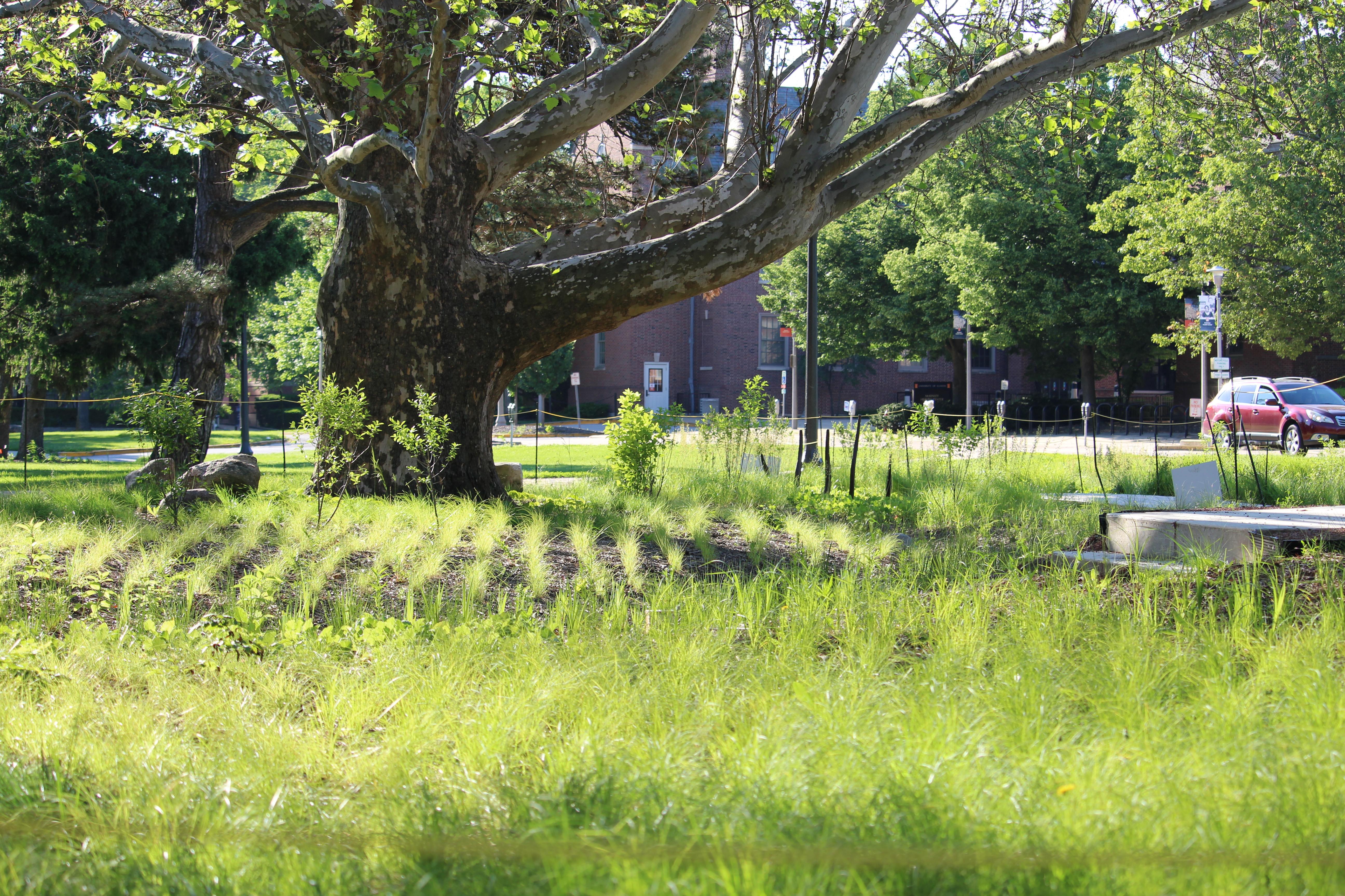 Red Oak Rain Garden