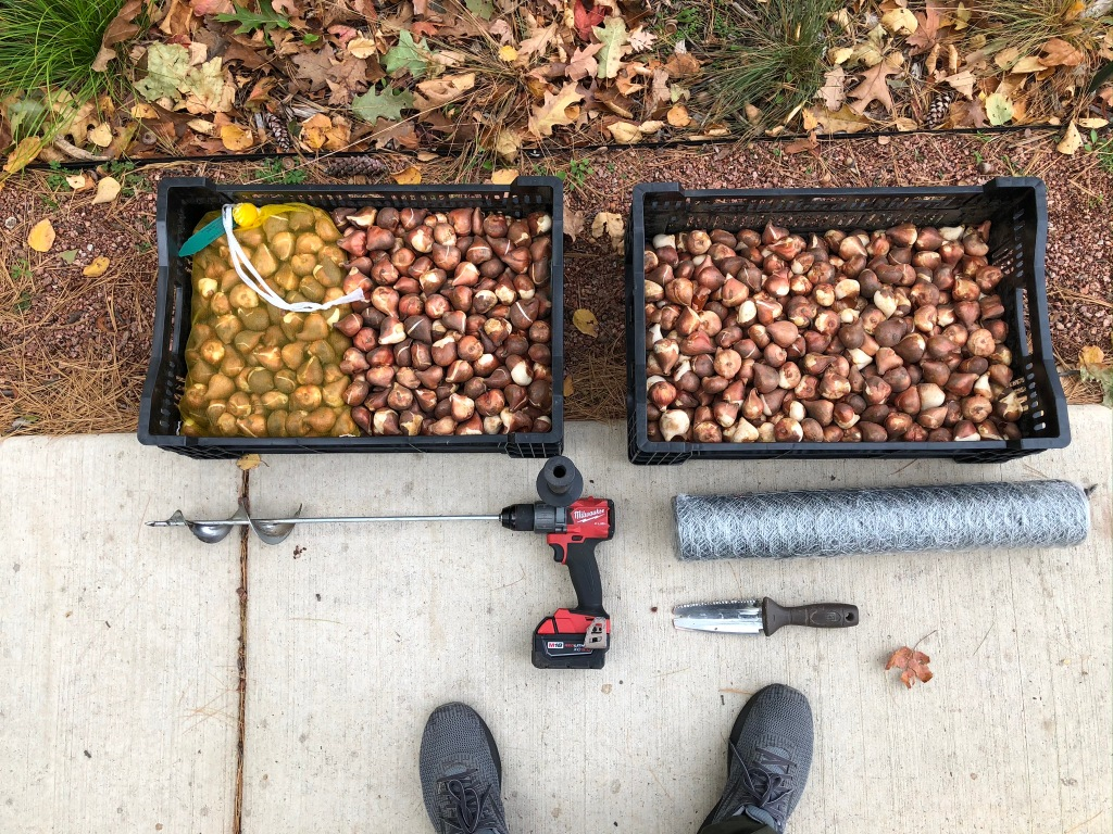 These are the tools I used for installing tulips. If you've ever wondered what 1,000 tulip bulbs look like, this is it!